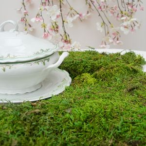 Dried Moss Slices 100g - decoration