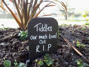 Pet Memorial - art & decorations