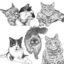 Tabby Cat Breed detailed Portrait