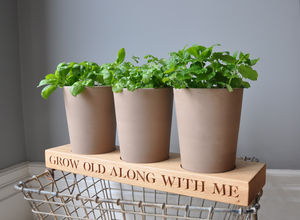 Personalised Mini Garden - 60th birthday gifts
