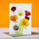 Californian Poppies Flower Card With Seeds To Grow