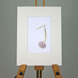 'Garlic' Limited Edition Print