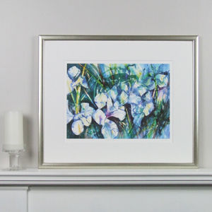 Blue Iris Limited Edition Fine Art Watercolour Print - nature & landscape