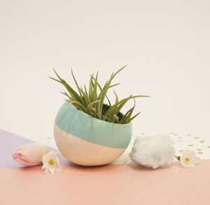 Spearmint Air Plant Pod - view all mother's day gifts