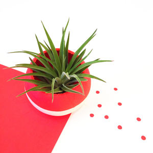 Neon Red Air Plant Pod - home accessories