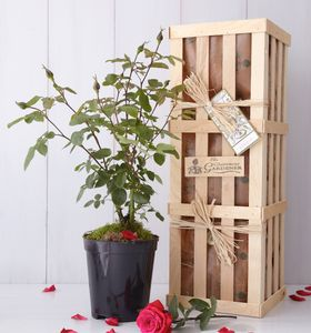 Valentine's Day Rose Gift - valentines wish list