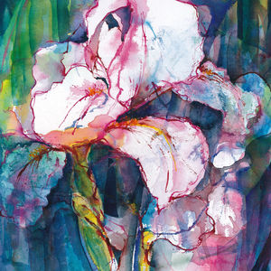 Pink Iris Limited Edition Fine Art Canvas Print - posters & prints