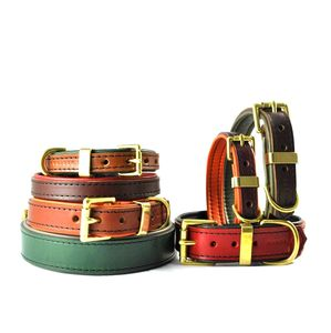 Padded Leather Dog Collar - walking