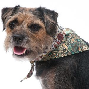 Liberty Mark Dog Bandana