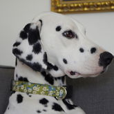Tilly Liberty Print Dog Collar - pets
