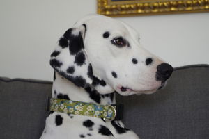 Tilly Liberty Fabric Dog Collar - dog collars