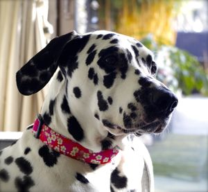 Sasha Liberty Print Dog Collar - pet collars