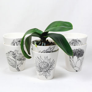 Hand Illustrated Planters - pots & planters