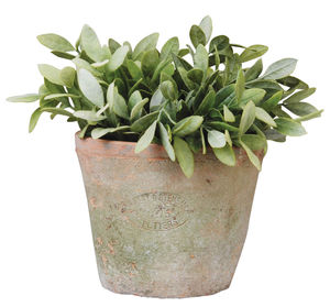 Terracotta Plant Pot - shop by price