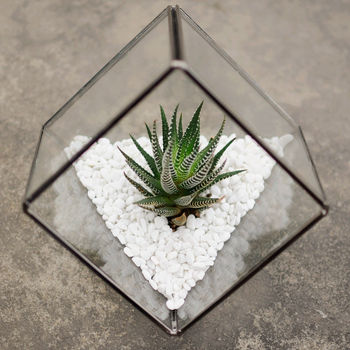 Glass Cube Succulent Terrarium Kit with White Gravels