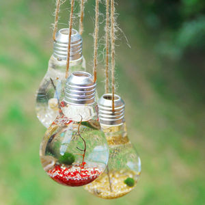 Hanging Lightbulb Marimo Moss Ball Terrarium - home accessories