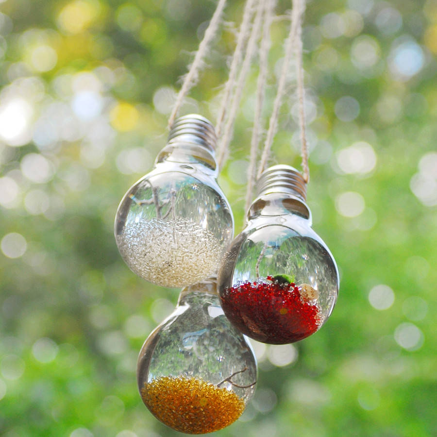 Hanging Lightbulb Marimo Moss Ball Terrarium By Dingading Terrariums