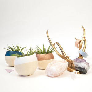 Eight Air Plants For Weddings - centerpieces & flowers