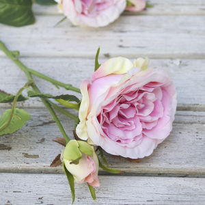 Everlasting Pink Rose - flowers, plants & vases