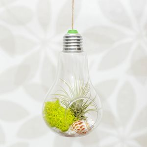 Hanging Lightbulb Air Plant Terrarium - flowers, plants & vases