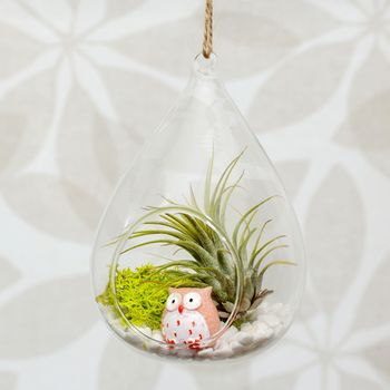 Hanging Glass Water Drop Air Plant Terrarium with Pink Owl