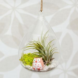Hanging Glass Water Drop Air Plant Terrarium - flowers & plants