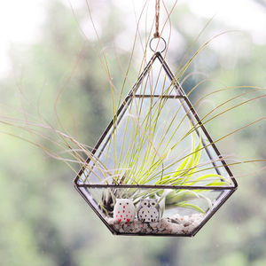 Hanging Geometric Vase Air Plant Terrarium With Owls - gardener