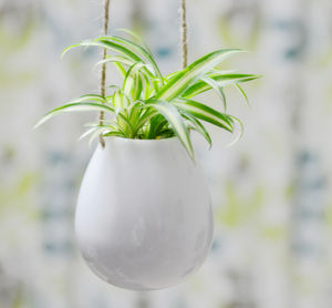 Ceramic Hanging Egg Vase - indoor garden