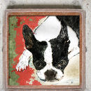 Boston Terrier Limited Edition Signed Print