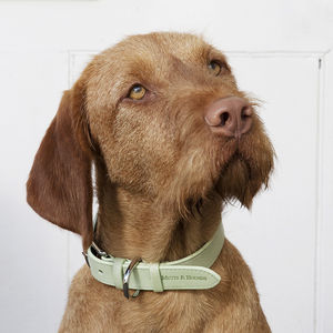 Sage Leather Dog Collar And Lead