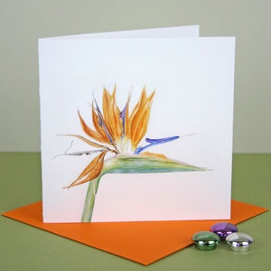 'Bird Of Paradise' Tropical Flower Card
