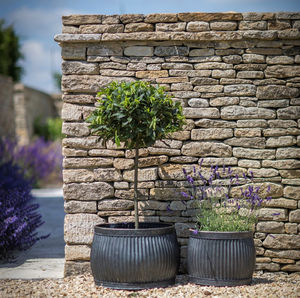 Set Of Two Shallow Round Planters - best in show