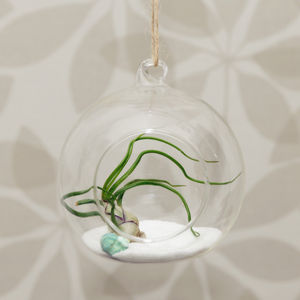 Hanging Glass Globe Vase Air Plant Terrarium - house plants