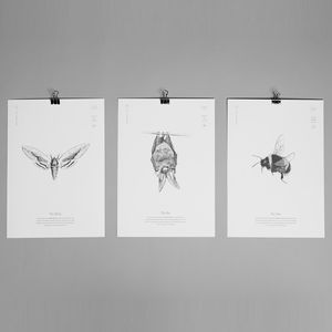 Set Of Three Bat, Bee And Moth Prints