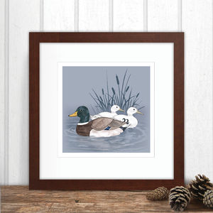 Limited Edition Duck Print - animals & wildlife