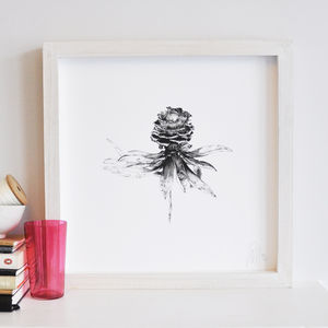 Monochrome Botanical Protea Print Two
