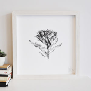 Protea Flower Print Three - drawings & illustrations