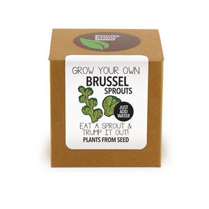 Grow Your Own Brussel Sprouts Plant Kit - garden sale