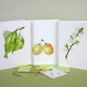 Pack Of Six ' Syston White Plum ' Cards - shop by category