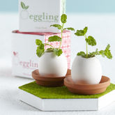 Grow Your Own Mini Garden Egg Kit - garden