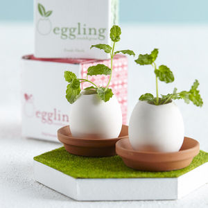 Grow Your Own Mini Garden Egg Kit - prepare for spring