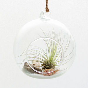 Beach Themed Air Plant Hanging Terrarium - flowers, plants & vases