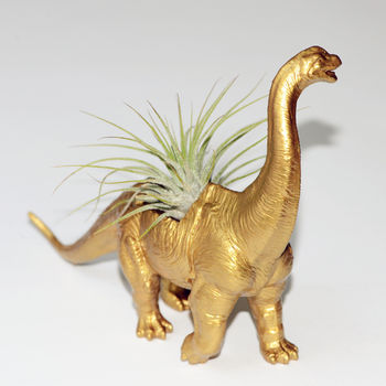gold dinosaur planter with air plant