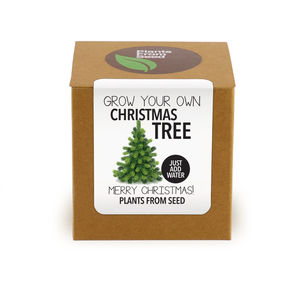 Grown Your Own Christmas Tree Kit