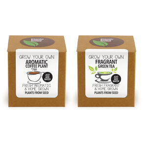 Coffee And Tea Plant Kit Selection - gardening
