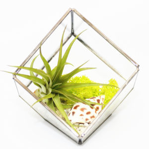 Glass Cube Air Plant Terrarium Kit - flowers, plants & vases