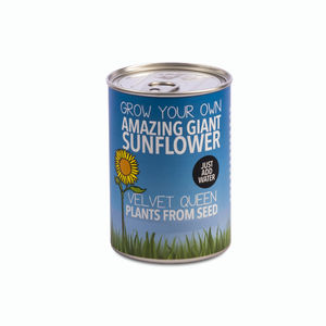 Grow Your Own Giant Sunflower Plant Decorative Tin Kit