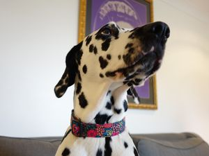 Beatrix Liberty Fabric Dog Collar - dog collars