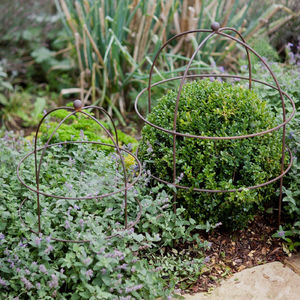 Domed Plant Support - spring planting