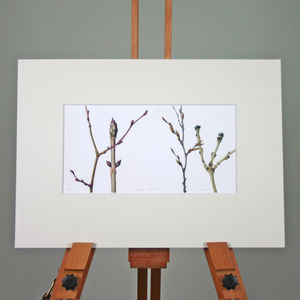 'Winter Branches' Limited Edition Print